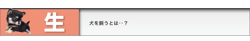 title_sei